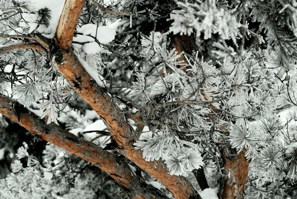 lemn si gheata