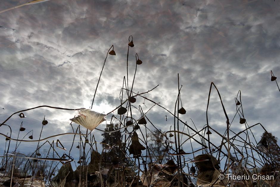 Apa lacului ca oglinda pentru plantele de la mal
