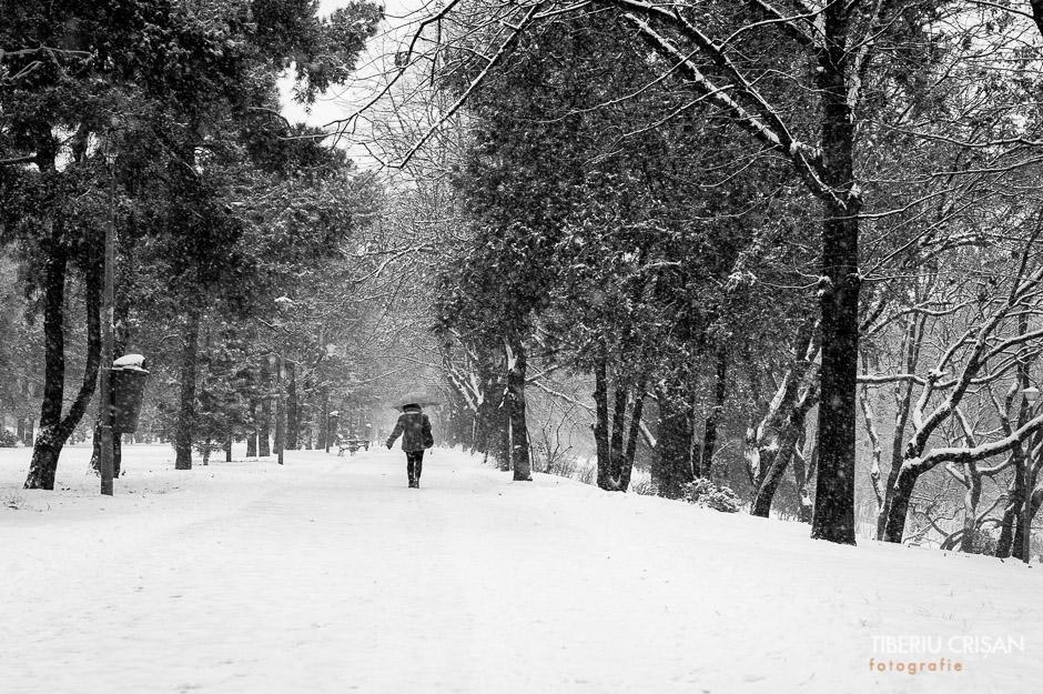Ninge iar