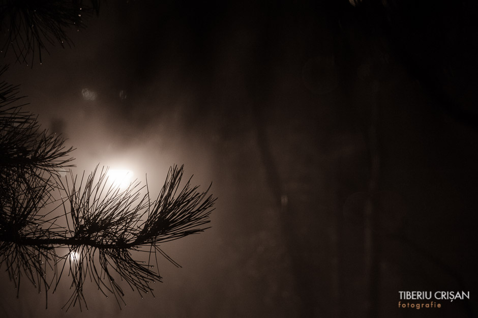 noapte-cu-ceata-in-parc-32