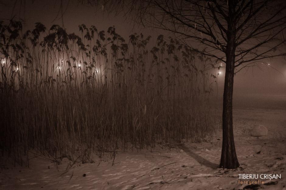 noapte-cu-ceata-in-parc-8