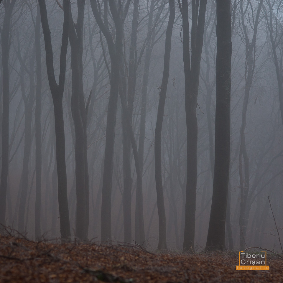 natura-inghetata-026