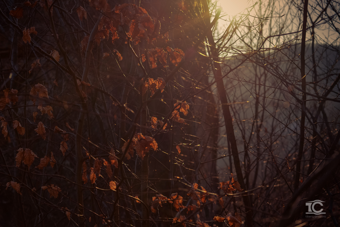 gradina-zmeilor-02-2015-018