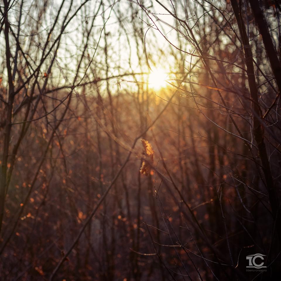 gradina-zmeilor-02-2015-028