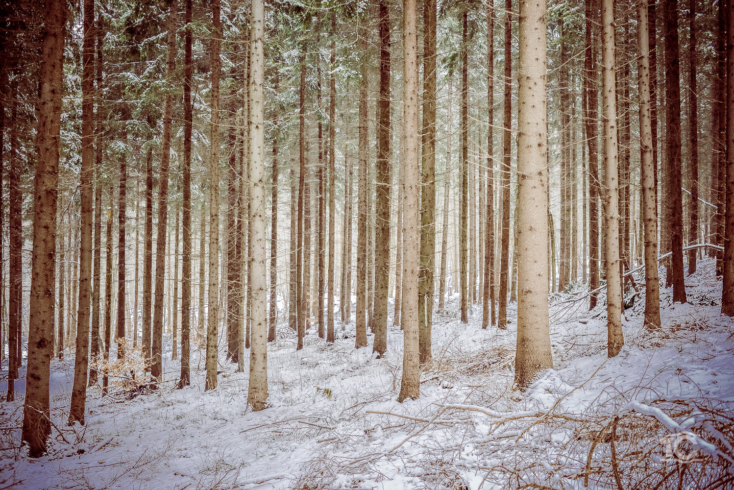iarna-feleacu-002