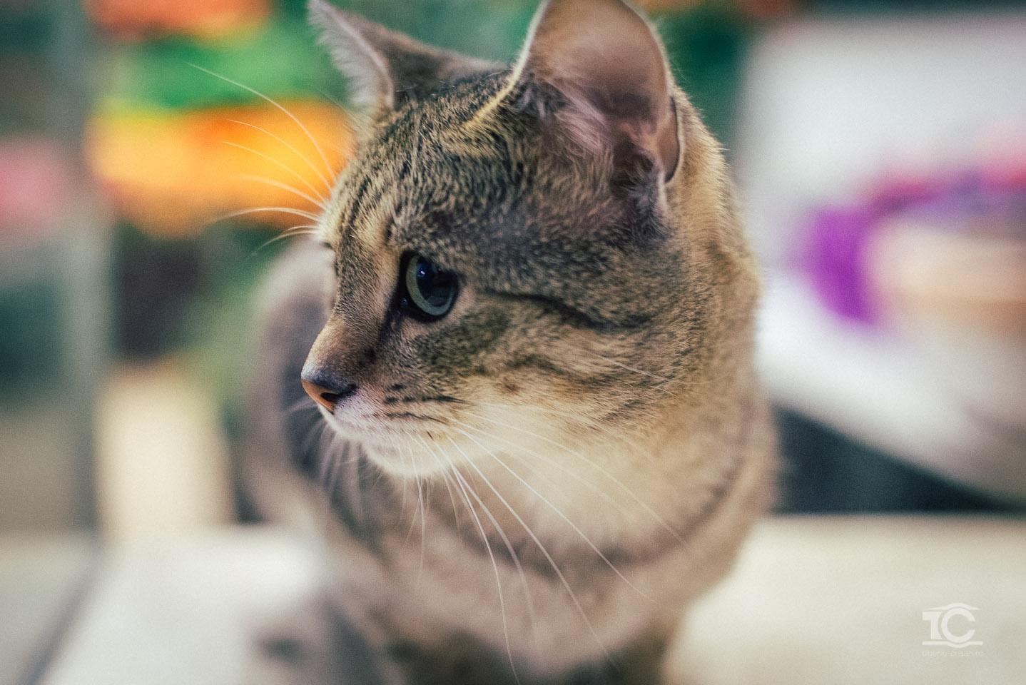 pisica-003