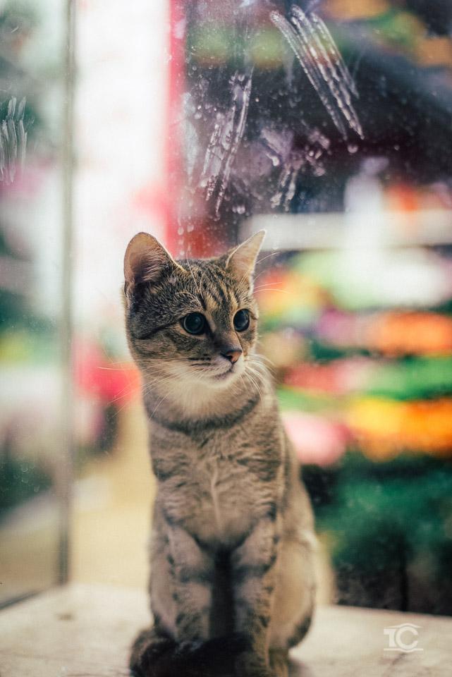 pisica-005