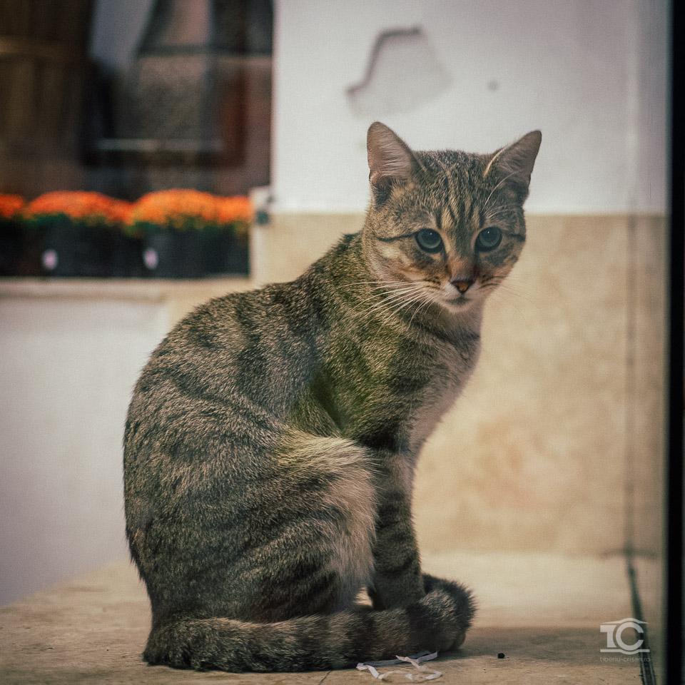pisica-007