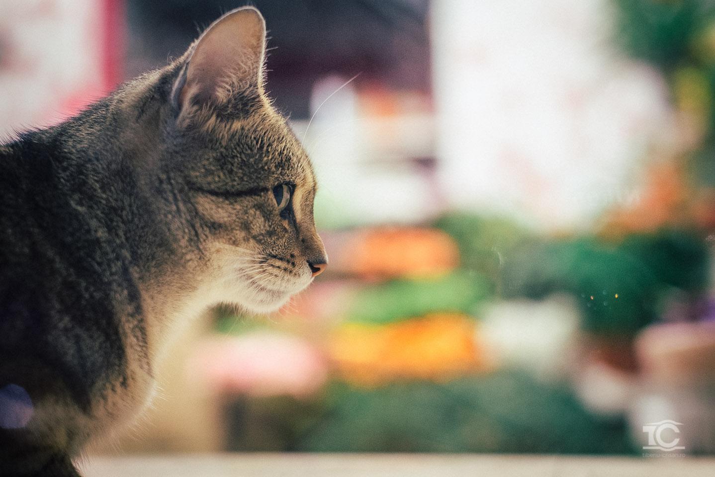 pisica-008